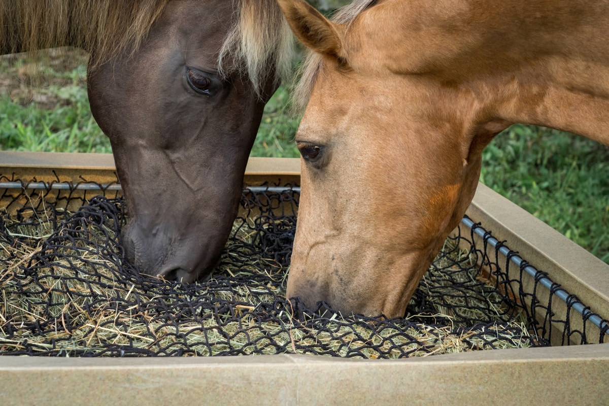 3 Reasons Why Slow Feeding Your Hay is Beneficial
