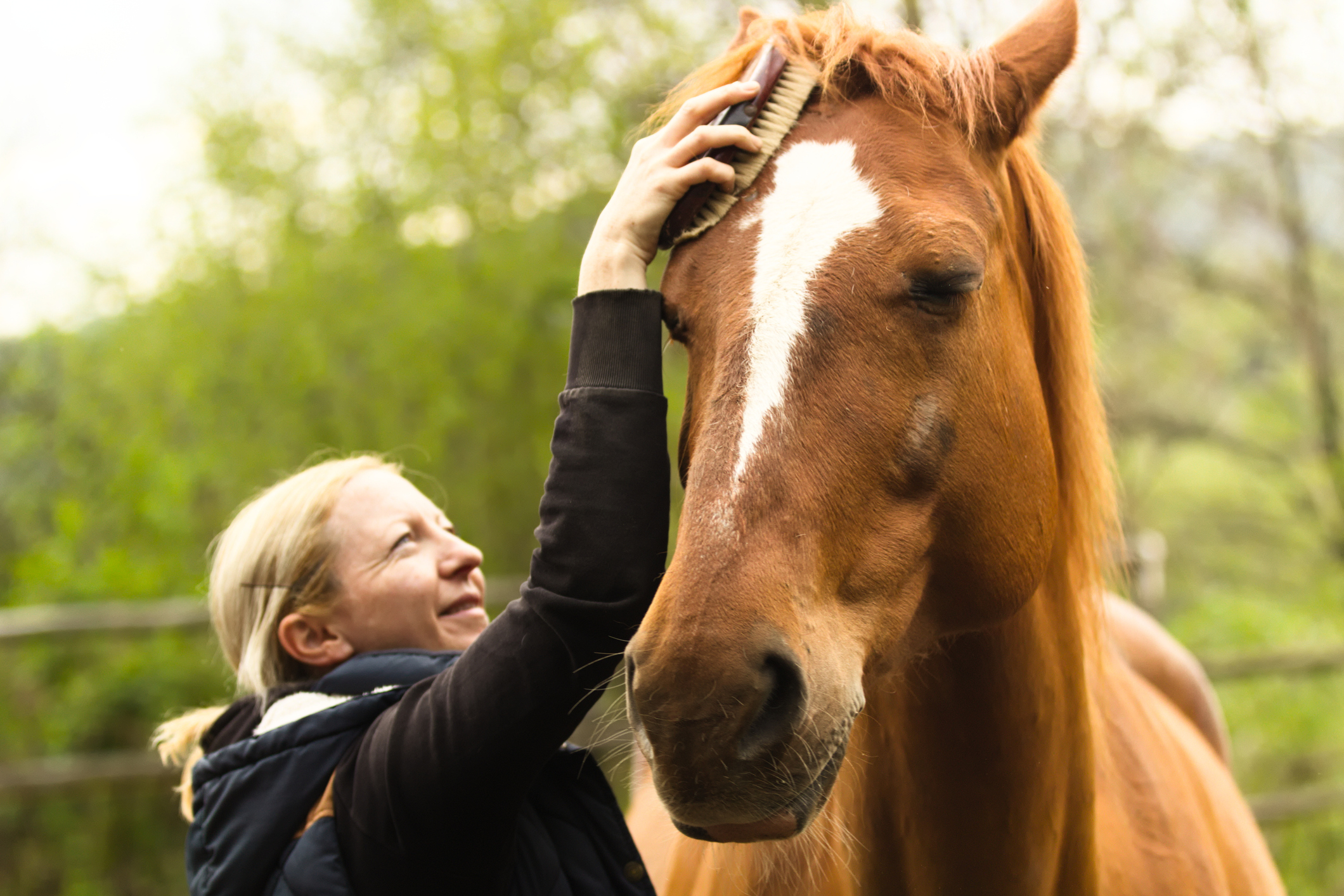 The Step-By-Step Guide to Grooming Your Horse