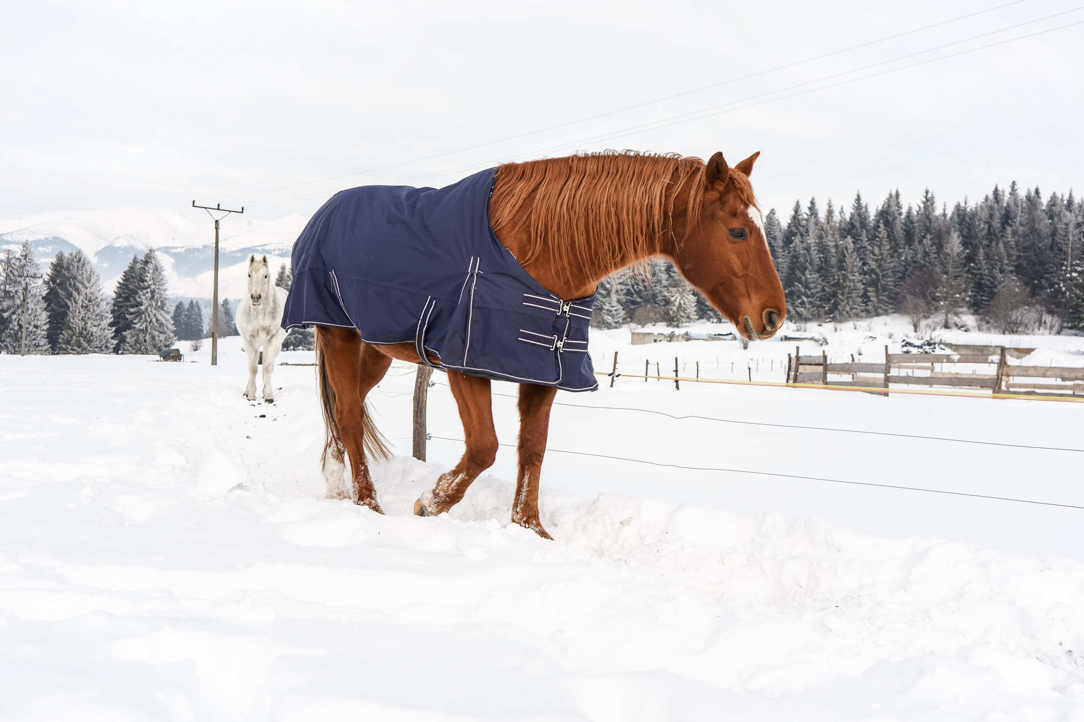 Gift Ideas for the Horse Owner in Your Life