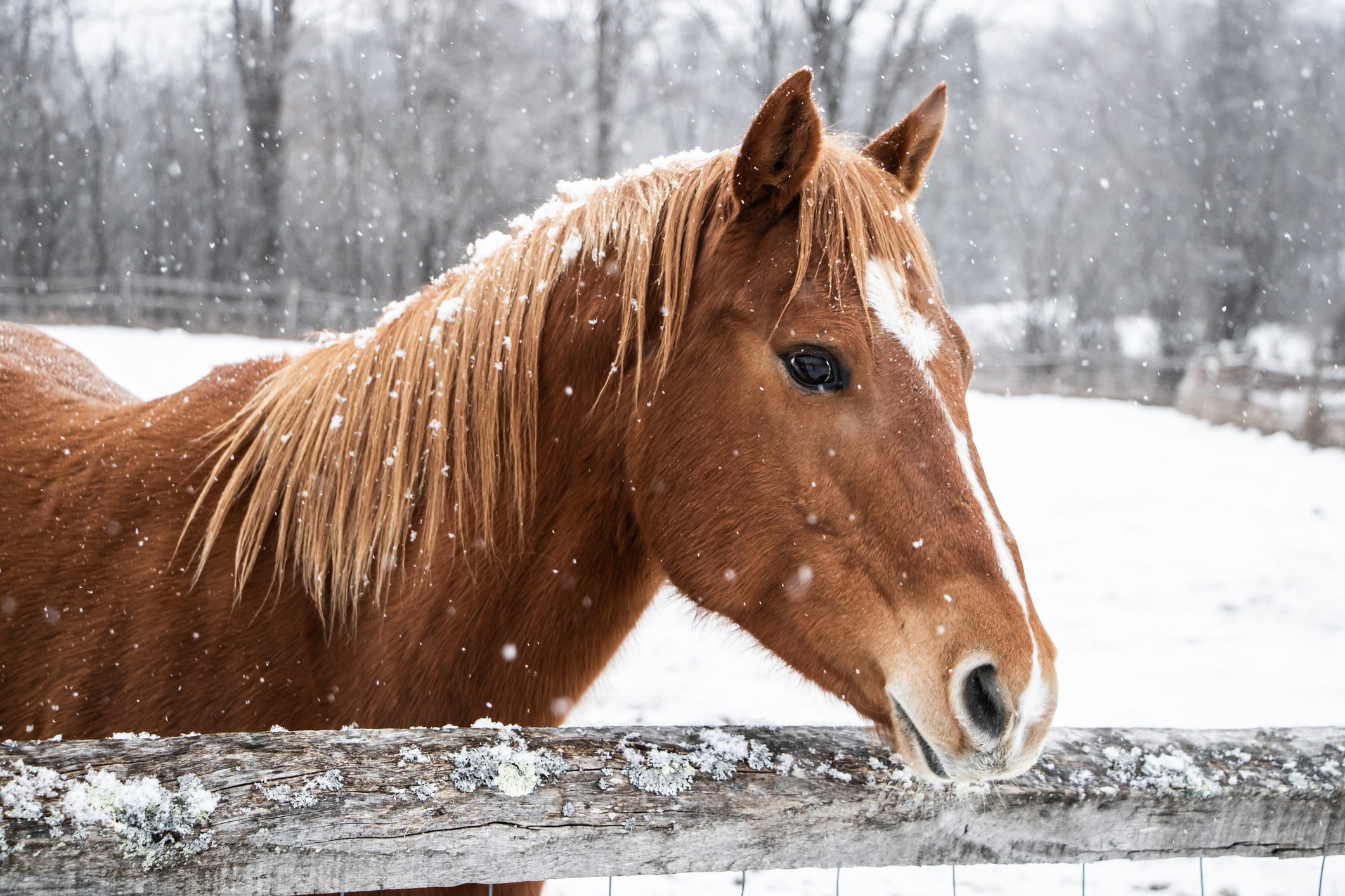 Keeping Your Horses Warm, Healthy & Happy During the Winter