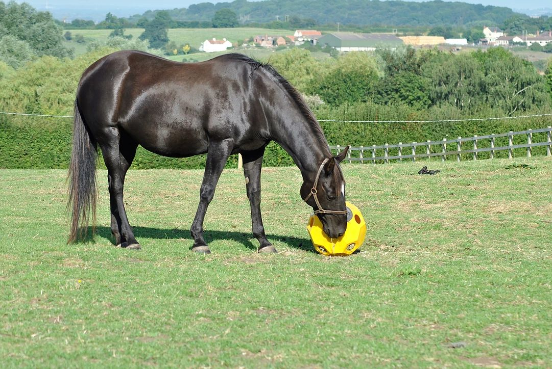 11 Ways to Keep Your Bored Horse Happy, Healthy and Entertained
