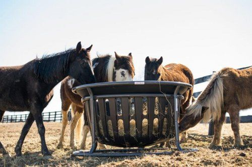 Which Hay Feeder is Best for My Horse?