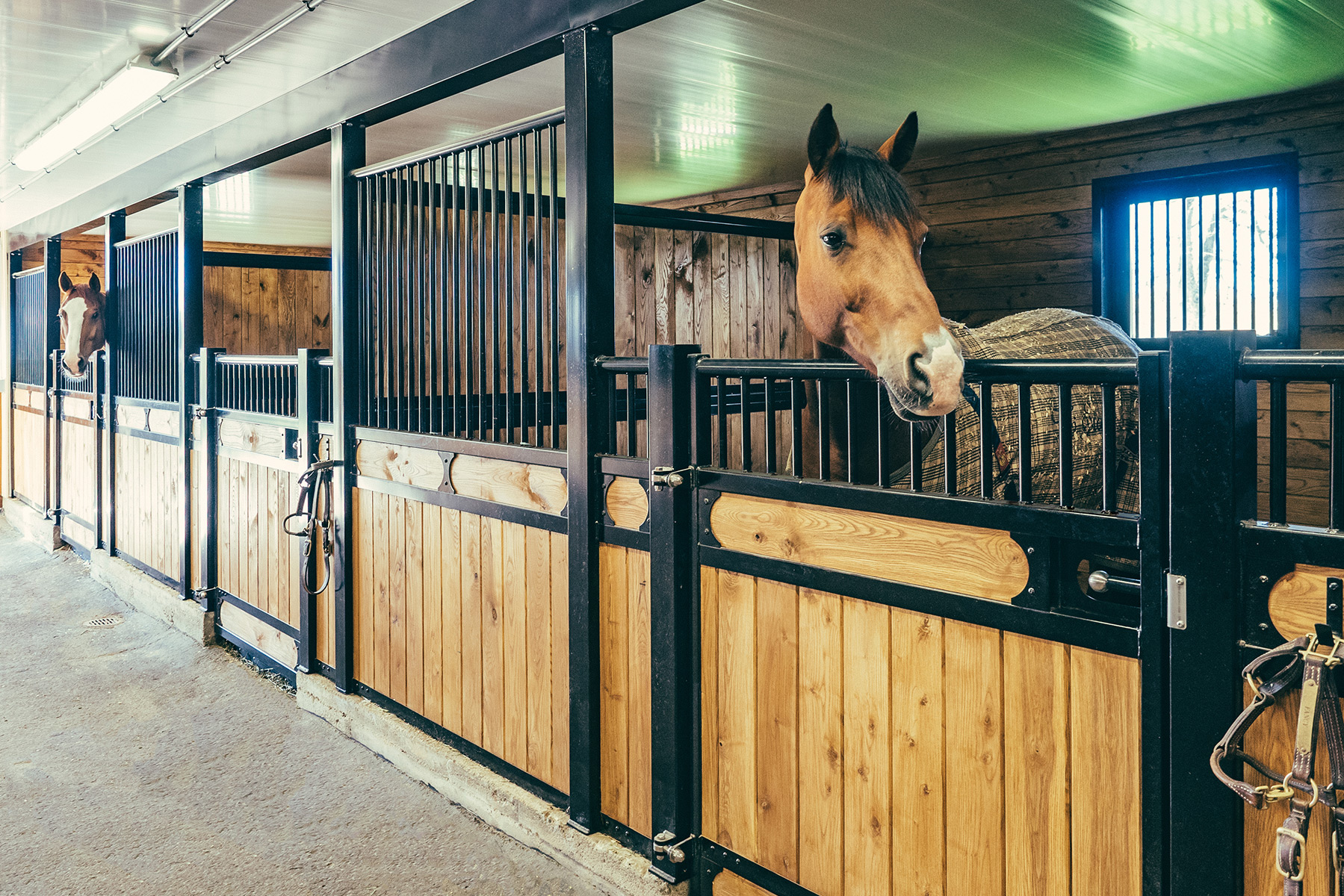Horse Stall Fronts For All Circumstances
