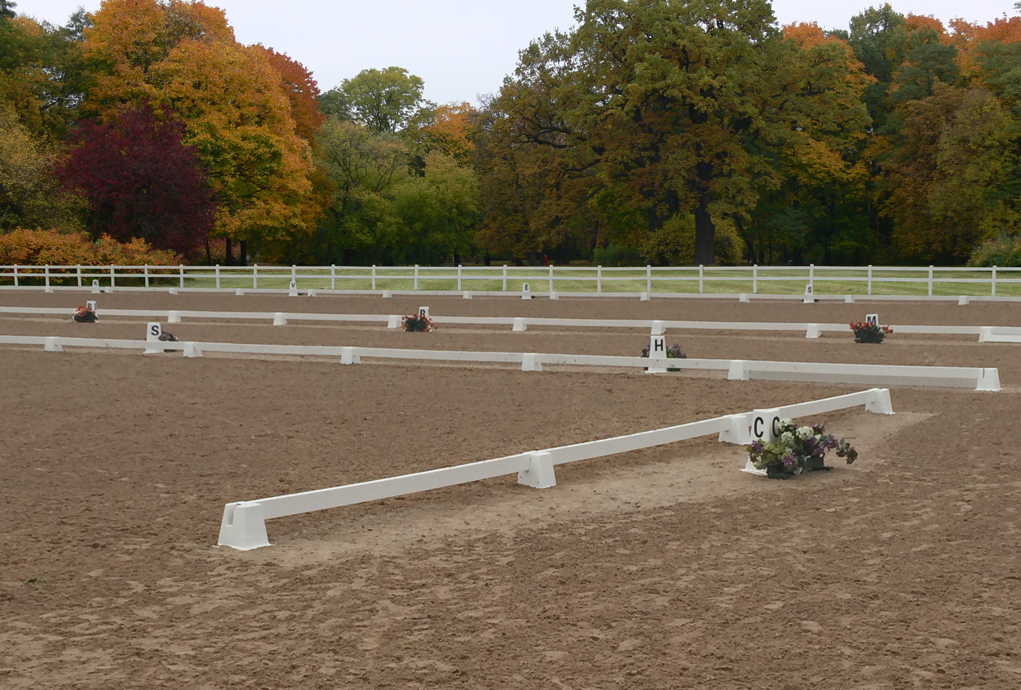 What a Dressage Arena Can Do For You