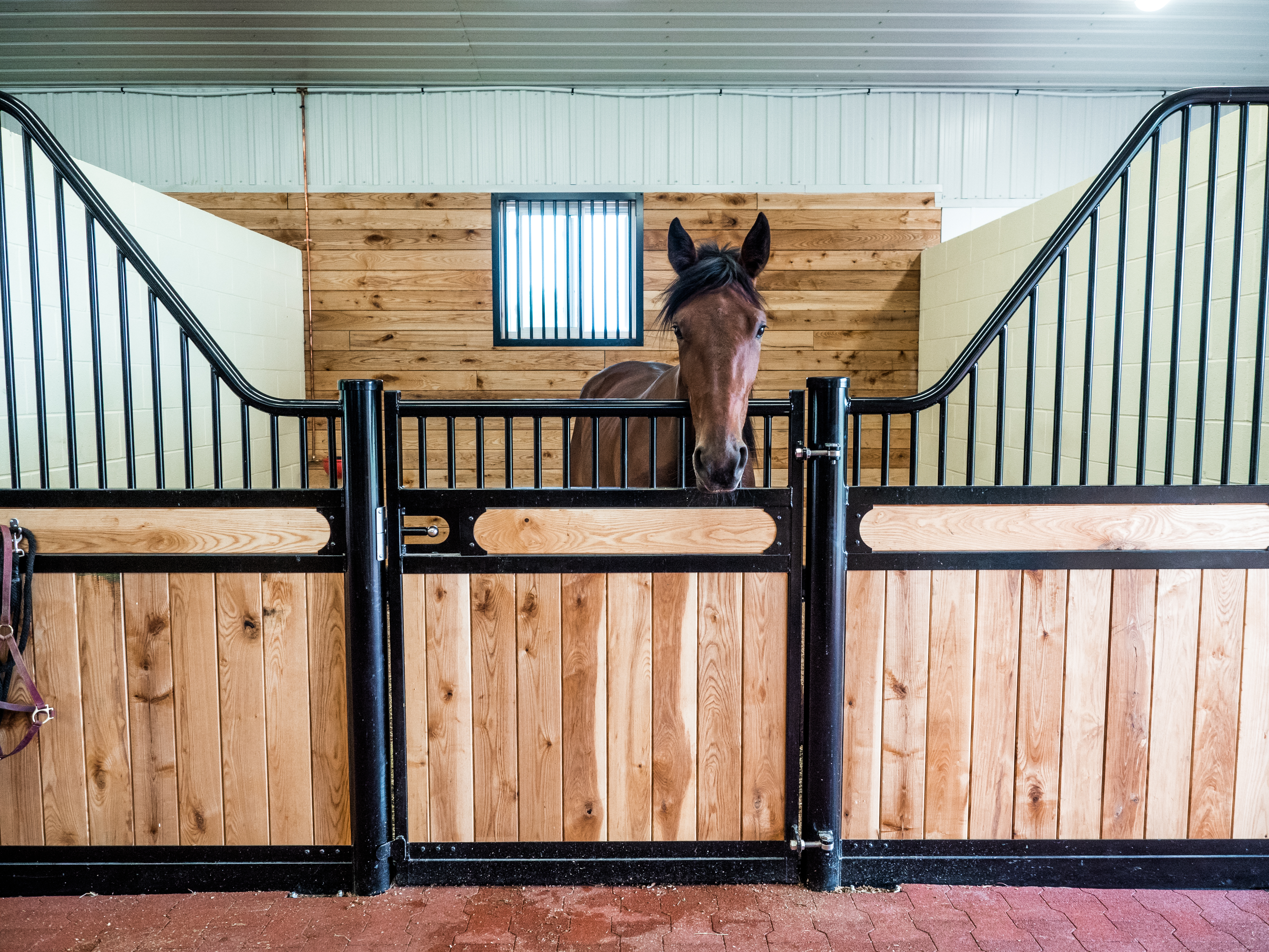 Choosing a Waterer for Your Horse Stalls