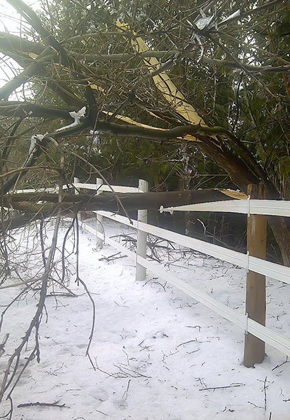 A fallen tree is seen over the top rail of flex fencing, but the fence is still operational