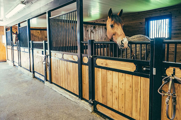 Discover System Equine Full Range of Equestrian Products